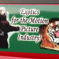 custom colors, images, logos printed onto magnet